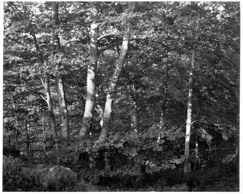 Bosc de Sant Celoni, 1968