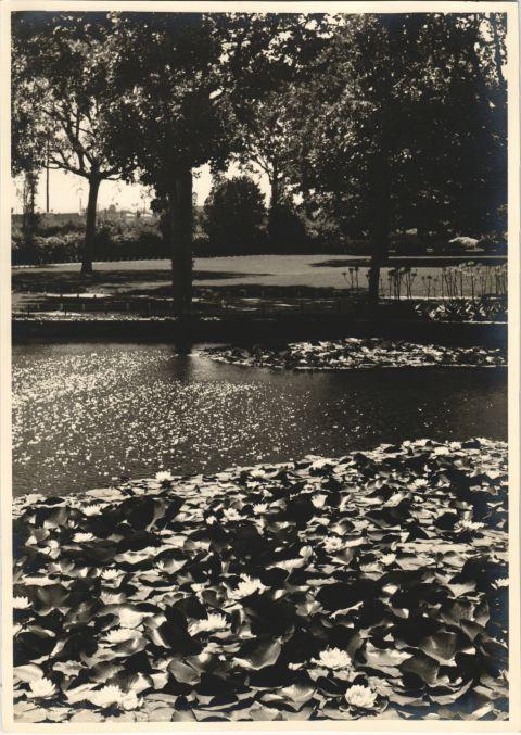 A well-kept garden Turò Park