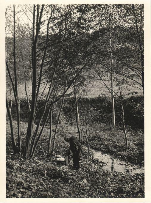 Vell collint cargols a Vallromanes, 1955