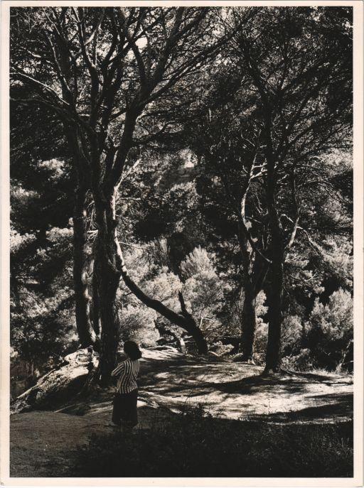 A Sant Bernat. El Montseny