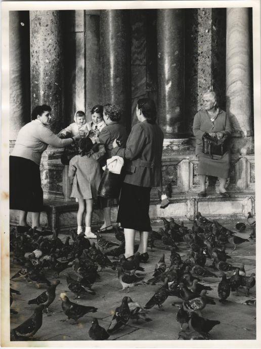Donant de menjar als coloms a Venècia