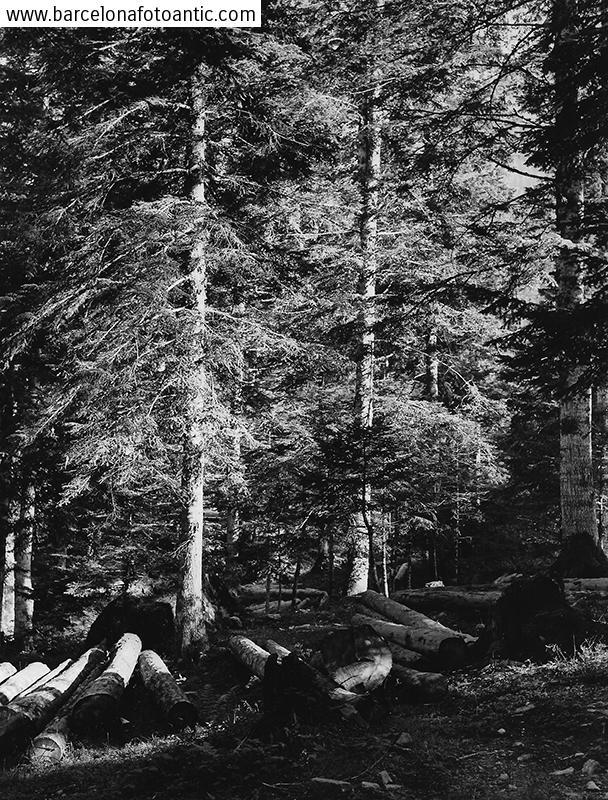 Bosc d'abets i pins a Artiga de Lin